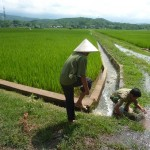 rice-small